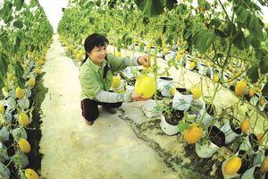 Phát triển nông nghiệp hữu cơ: Nhiều thuận lợi, lắm thách thức