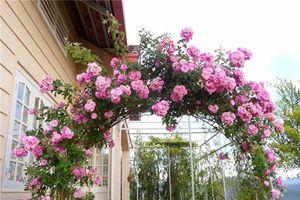 Ngôi nhà nhìn đâu cũng thấy hoa nở của ca sĩ Bích Phương