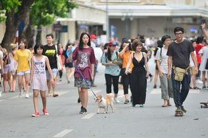 Sau thông tin cấm, thú cưng ít xuất hiện hơn trên phố đi bộ