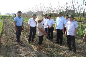 Phó Chủ tịch Thường trực UBND tỉnh Nguyễn Đức Quyền kiểm tra tình hình sản xuất nông nghiệp tại các huyện Thiệu Hóa và Yên Định
