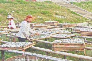 Huyện Tĩnh Gia có 493 doanh nghiệp và cơ sở chế biến thủy, hải sản