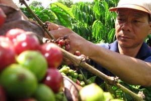 Giá nông sản hôm nay 17/9: Tiêu Việt Nam tràn ngập thị trường Ấn Độ, giá cà phê giảm nhẹ