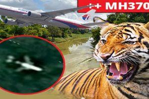 Nóng: Nguy hiểm chết người rình rập thợ săn MH370 trong rừng Campuchia