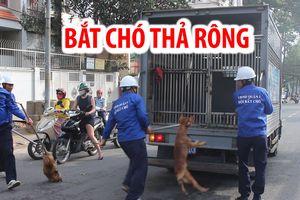 Ông Đoàn Ngọc Hải: Q.1 tiếp tục quyết liệt xử lý chó thả rông