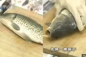 Mổ cá siêu nhanh, siêu sạch lại không tanh chỉ nhờ vật dụng bỏ đi