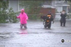 Clip: Phóng viên dừng đưa tin để cứu chú chó bị nước lũ cuốn trôi