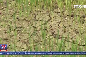Hạn hán gay gắt ngay giữa mùa mưa tại Đắk Lắk