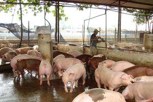 Miền Nam quyết liệt phòng chống bệnh dịch tả lợn châu Phi