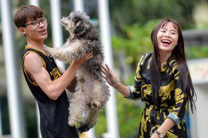 Chó không rọ mõm tung tăng trên phố đi bộ hồ Gươm