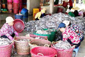 Bà Rịa-Vũng Tàu: Nhiều chuyển biến tích cực của ngư dân trong đánh bắt thủy hải sản