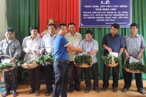 Tặng 46.500 cây giống sâm Ngọc Linh cho 7 xã khó khăn