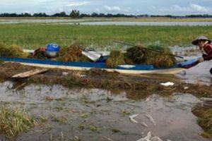 Nam Định: Chán gieo cấy, người dân bỏ hoang gần 1.000ha đất lúa