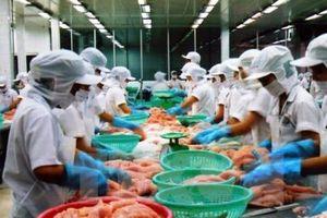 Xuất khẩu cá tra sang Mỹ: Doanh nghiệp vẫn 'đối mặt' với trở ngại