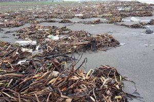 Nghệ An: Biển Diễn Thành tràn ngập rác