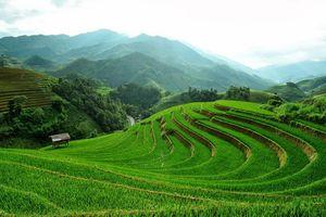 Triển vọng hợp tác công tư trong nông nghiệp Việt Nam