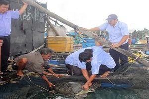 Kiên Giang: 12 con rùa xanh quý hiếm bị nuôi nhốt được thả về biển