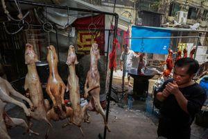 'Thủ phủ' thịt chó ở Trung Quốc, 10.000 - 15.000 con bị giết thịt/10 ngày