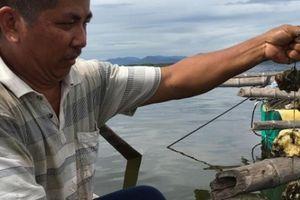 Khánh Hòa: Nuôi hàu trên dây, 'đút túi' cả trăm triệu đồng/năm
