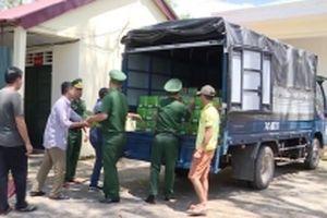 Bắt vụ vận chuyển bia lậu số lượng lớn ở Quảng Trị