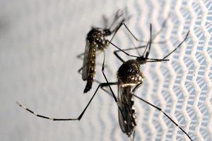 Công ty con Alphabet dùng trí tuệ nhân tạo chống muỗi