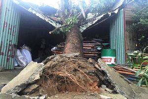 An Giang: Cây đổ đè sập nhà dân khiến 2 mẹ con tử vong