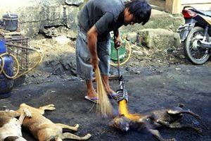 Lời đồn 'chó báo oán' khiến phố thịt chó Nhật Tân lừng danh biến mất?