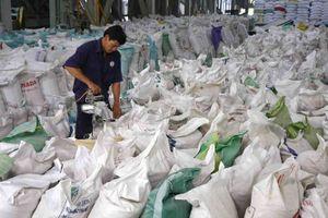Xuất khẩu gạo sẽ sôi động trong những tháng cuối năm