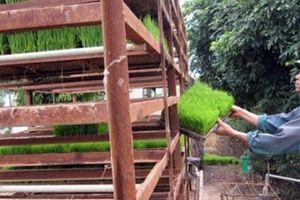 Người bỏ ruộng, người đi thuê lại 120 mẫu đất cấy lúa, gặt tiền tỷ