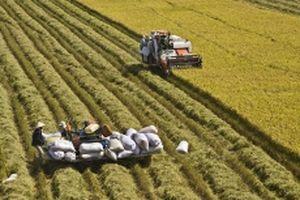 Từ nghị quyết về 'tam nông' đến nền nông nghiệp hiện đại (Kỳ 1)