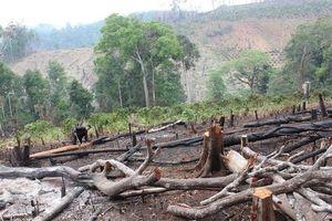 Lạng Sơn: Trưởng phòng NN&PTNT Tràng Định bị bắt vì để người dân phá rừng