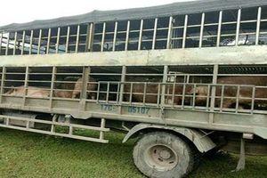 Quảng Ninh: Phát hiện 3 vụ vận chuyển trái phép nội tạng, mỡ lợn