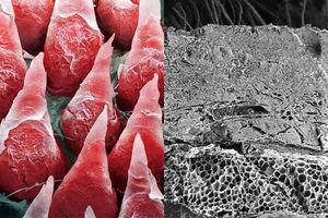 Không thể ngờ các cơ quan trong cơ thể có hình dạng như vậy dưới ống kính hiển vi