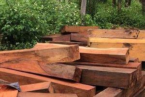 Vụ gỗ lậu tập kết ở Mang Yang: UBND tỉnh Gia Lai chỉ đạo làm rõ