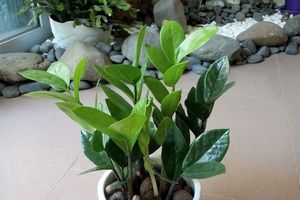 Trước nhà mà trồng 5 loại cây này đảm bảo tài lộc vào ầm ầm