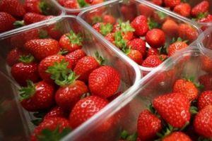 Cây kim khâu nhỏ bé hủy hoại ngành công nghiệp trái cây tươi