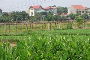 Nâng chất nông thôn mới Vĩnh Yên