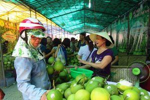 Thừa Thiên - Huế: 8,7ha thanh trà Thủy Biều được chứng nhận VietGAP