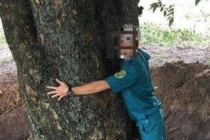 Thông tin tiếp tay đào trộm gỗ quý: Cán bộ giải thích