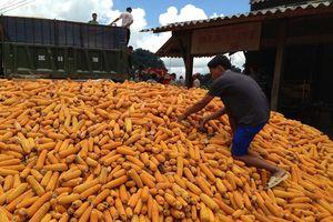 Tín dụng nông nghiệp: Kỳ vọng từ Nghị định 116