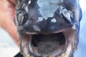 Kinh ngạc cá có hàm răng giống hệt người ở Nga
