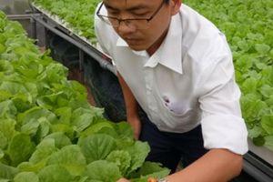 8X Sài Gòn bỏ ngân hàng lương cao về 'nghịch nước' trồng rau
