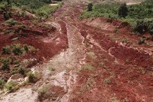 Lâm Đồng: Đất trồng cà phê sụt lún bất thường, lấn lên tận đỉnh đồi