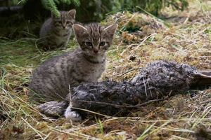 Tưởng mèo con bị bỏ rơi, đến khi phát hiện sự thật khó tin