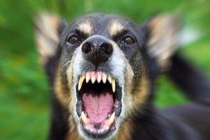 Một phụ nữ tử vong sau gần 2 tháng bị chó cắn