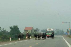 Nghệ An: Hiểm họa tai nạn giao thông trên đường N5