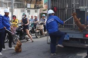 Bất an trước nạn chó chạy rông ngoài phố