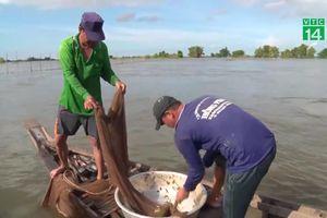 Theo chân ngư dân săn cá linh mùa nước nổi