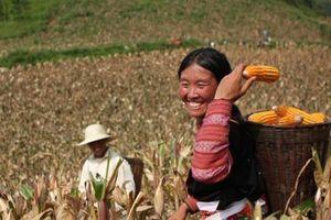 Giảm tái nghèo và chênh lệch thu nhập bền vững: Cần tính toán căn cơ