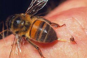 Bảy người bị ong đốt khi đang gặt lúa ngoài ruộng