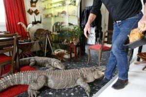 Người đàn ông sống cùng 400 con cá sấu, rắn và nhện độc
